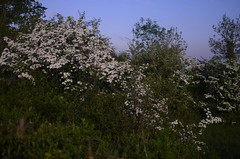 SPC_2331 (seansverige) Tags: moonlight naturallightphotography nocturnalphotography longexposure