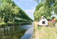 Damse Vaart (Wilma van Oorschot) Tags: wilmavanoorschot angelphotography iphone6plus iphone damme belgium canal trees outdoor spring damsevaart