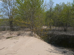 Sand to Swamp 2 (geodeos) Tags: westmeathprovincialpark ottawariver swamp lagoon water beach sand forest tree landscape scenery nature