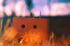 Danbo (18) @danbo/данбо2 (Robert Krstevski) Tags: robertkrstevskiblogspotcom robertkrstevski danboard danbomacedonia danbo danbostory danboamazon danborou 365danbo nature flowers flora photography photooftheday photograph photo photographer revoltech robot popular balkan europe spring данбо