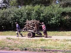 Firewood III - 15th Feb 2017 (princetontiger) Tags: kenya firewood fuel cart load
