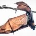 Flying Foxes Yarra Bend Park-16