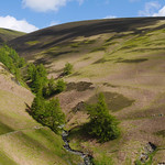 Shade and trees and heather and grass thumbnail