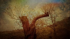 Renaissance (rirififi83) Tags: tree forest art texture tableau