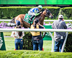 Hawksmoor wins the New York Stakes (EASY GOER) Tags: horse racing belmontpark canon5dmarkiii thoroughbred equine sports races racetrack canon 5d mark iii track thoroughbreds horseracing horses ny sportofkings athletes newyorkstate 5dmarkiii