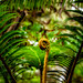 Tropical Fern