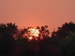 Bright (Lexie's Mum) Tags: walks walking walkingthedog spring sun nature sunset fiery