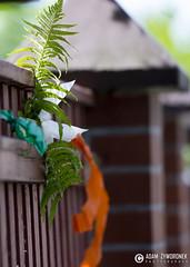 """adam zyworonek fotografia lubuskie zagan zielona gora • <a style=""""font-size:0.8em;"""" href=""""http://www.flickr.com/photos/146179823@N02/35285440846/"""" target=""""_blank"""">View on Flickr</a>"""