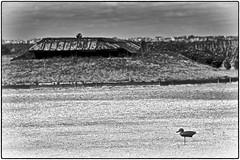 Cane à pied ! (Patevy Damant) Tags: aquitaine bw jour médoc monochrome nb nikon paysage silhouette