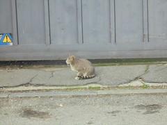 1157 (en-ri) Tags: gatto randagio stray cat miao sony sonysti tigrato grigio