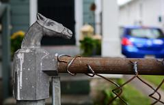 Horse (davidwilliamreed) Tags: horse fence post sisters house neworleansla dof