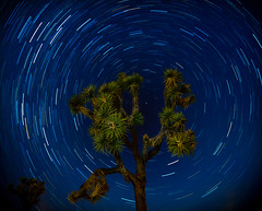 from the center | Joshua Tree Polaris (designbuildinhabit) Tags: starcircles dynamic dreamland exploring paintingwithaniphone northstar nikondf multipleexposures joshuatree shiningstar swirl escape centerofeverything tree polaris startrails timelapse california night