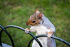 Hide park's squirrel (Alessandro Dal Cortivo) Tags: hide park london squirrel nature cute animal ohhh