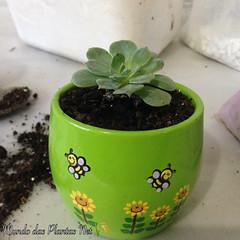 Suculenta Mini (adriano270266) Tags: mini suculent cacto cactus suculenta