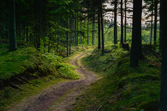 Winding between green and trees (Rind Photo) Tags: winding path trail road gravel landscape landschaft grren nature trees tree light lowlight atmosphere beautiful rindphoto clauschristoffersen lowkey silence silhouettes forrest