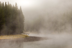 floating gravel bar (Christian Collins) Tags: canoneosrebelt2i 7200 yellowstone river misty morning gravel bar floating mysterious spooky trees wyoming west september fall