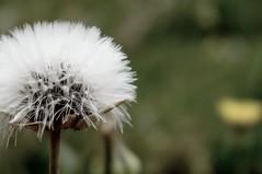 White Flower (Abderraouf Cheniki) Tags: flower nex 5t sony black white best shot gray