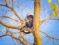 monkey3 (Isai Hernandez) Tags: