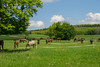 Mahlzeit! (matthewjpollard) Tags: horse farm germany swabian hike nature animal
