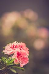 Simone (Ederson Gomes) Tags: bokeh flowers f18 85mm city flor canon natureza sãopaulo vida paulista brazil life t2i cidade brasil sp canon85mm18 conjuntonacional