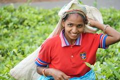 Sri Lanka, tea pickers (63) (walterkolkma) Tags: srilanka tea pickers teapickers centralhighlands nuwaraeliya strathdon teaestates women laborers tamils sonya6300