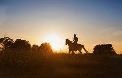IMG_3567 (Mary Anne Morgan) Tags: horses silhouette