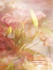 A Touch of Softness - Week 21 (RedHatGal: Barbara Butler/FireCreek Photography) Tags: fineart flowers softness texture stilllife creamy softdetails barbarabutlerphotography firecreekphotography redhatgal dogwood2017 dogwood52week21