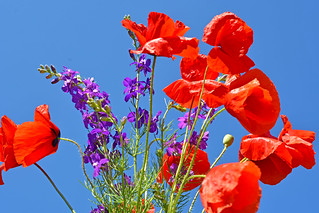 Wild flower bouqet