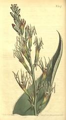 Anglų lietuvių žodynas. Žodis agave family reiškia agave šeimos lietuviškai.