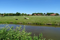 20170528 23 Niehove (Sjaak Kempe) Tags: 2017 lente spring sjaak kempe sony dschx60v nederland netherlands niederlande provincie groningen niehove