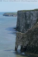 Bempton Cliffs (STAFF.PAUL) Tags: cliffs canon canon7d canonl100400 outside bempton outdoor sea seabird thisphotorocks