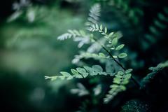 (t*tomorrow) Tags: canon eos 5d2 50mm sigma50mmf14 植物