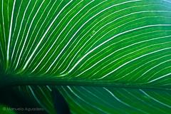 #cala #hoja #leaf #verde #green #2016 #málaga #andalucía #españa #spain #planta #plant #naturaleza #nature #macro #photographer #photography #picoftheday #sonystas #sonyimages #sonyalpha #sonyalpha350 #sonya350 #alpha350 (Manuela Aguadero) Tags: picoftheday españa sonystas plant photography 2016 verde green hoja sonyalpha sonya350 sonyalpha350 sonyimages macro andalucía leaf planta nature photographer alpha350 spain cala naturaleza málaga