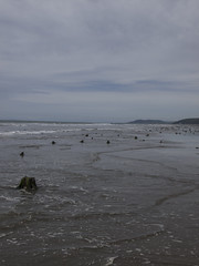 (Turbogirlie) Tags: borth ceredigion seaside walescoastalpath ancientforest petrifiedforest beach wales welshcoast