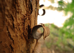 Chocolate tree III (Argyro...) Tags: tree bark trunk chocolate texture macro nature bokeh wood 7dwf