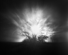 Sunrise, Nelson Island (LowerDarnley) Tags: pinhole zeroimage 4x5 infraredfilm zoneplate overlay composite nelsonisland rowley ma capeann thegreatmarsh rolleifilm sunrise tree baretree backlit