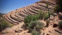 Snow Canyon (trenasligting) Tags: trena stgeorge utah redrock desert