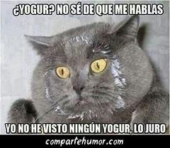 Animales (Comparte Humor) Tags: compartehumor humor playstore imagenes risas graciosas animales mascota mascotas gato gatos yogur yogurt comer come comiendo