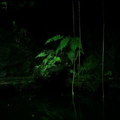 Untitled (richardhwc) Tags: rolleicord vb kodak portra160 guangzhou china schneiderkreuznach xenar 75mmf35 mediumformat 120 6x6 film