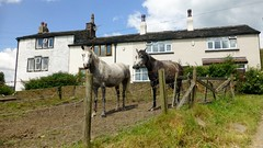 Equines Near Wardle (Dugswell2) Tags: equines near wardle