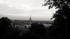 Torino dal Monte dei Cappuccini #torino #storia #biancoenero #moleantonelliana #vivipiemonte #cittaitaliane #bellecitta #piedmont (steu76) Tags: vivipiemonte torino piedmont storia moleantonelliana biancoenero bellecitta cittaitaliane