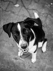 And now? (mripp) Tags: art kunst vortage retro from above dog hund dogs animal animals pet pets haustier black white mono monochrom schwarzweiss friend freunde leica m10 summicron 28mm