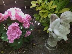 PINK HYDRANGEA, ETC (kelsey61) Tags: flowers flower floweringplants floweringplant fleur gardens garden gardenlandscaping plants plant leaf leaves foliage yard backyard hydrangea gardenstatuary