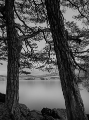 Experiment (strupert) Tags: 750nm lake blackandwhite mono monochrome trees longexposure singhray ir