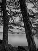 Experiment (strupert) Tags: 750nm lake blackandwhite mono monochrome trees longexposure singhray ir