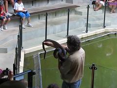 Snake handling presentation at Hartley's Crocodile Farm (tanetahi) Tags: crocodilefarm snakehandling wangettibeach captaincookhighway farnorthqueensland wettropics