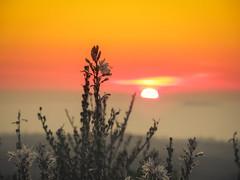 Sunset... My Favorite Color (Tassos Giannouris) Tags: sun sunset set nature sky orange sea plants flowers kos greece zoom focus