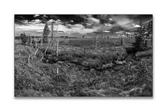 Hohes Venn (Karl-Heinz Bitter) Tags: hohes venn moor bachlauf monochrom monochrome landschaft landscape belgien belgium sky himmel bäume trees river eifel naturpark
