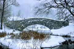 Winter Central Park January 2016 (dannydalypix) Tags: winterwonderland manhattan nyc newyorkcity blizzard2016 centralpark winter