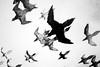 Genesis (willy vecchiato) Tags: bird abstract abstraction sky uccelli veri finti finzione dark monochrome monocramatico blackandwhite biancoenero fine art arte artistic mistery minimalist minimal fuji x100s conceptual concettuale surreal surrealism surrealismo surreale
